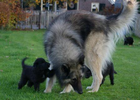 kane en de puppies