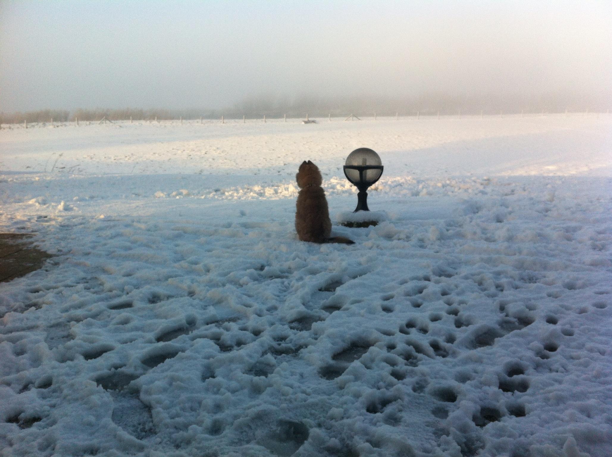 kim puppy in de sneeuw