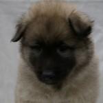 Val Thorens five weeks old