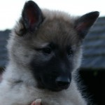 Val Thorens seven weeks old