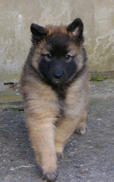7 wit female neua x unir 6 wks