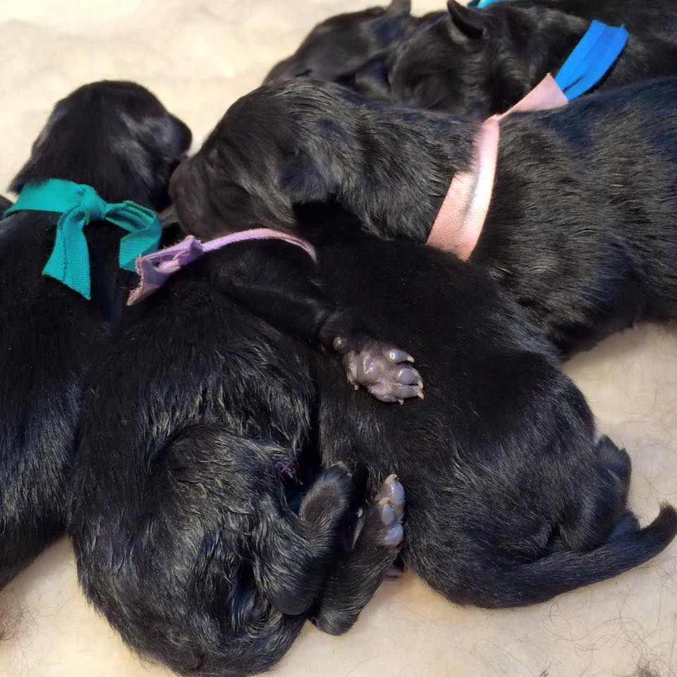 pups s nest